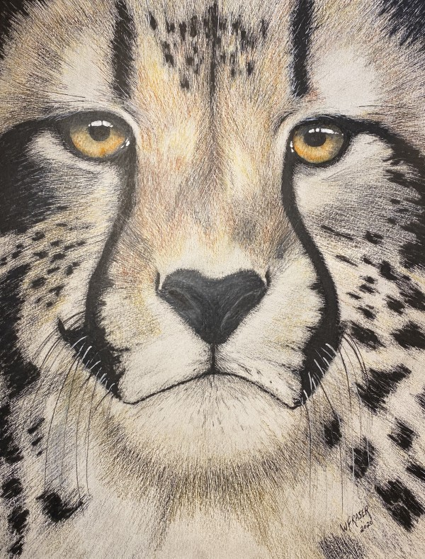 Cheetah by Wanda Fraser
