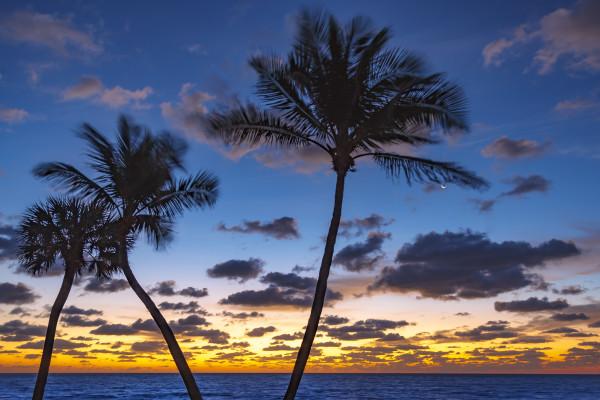 Ocean Way Palms by Kent Burkhardsmeier