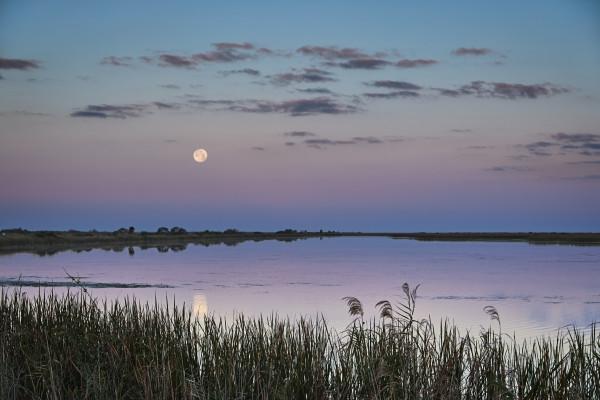 Moonlit Solitude by Kent Burkhardsmeier