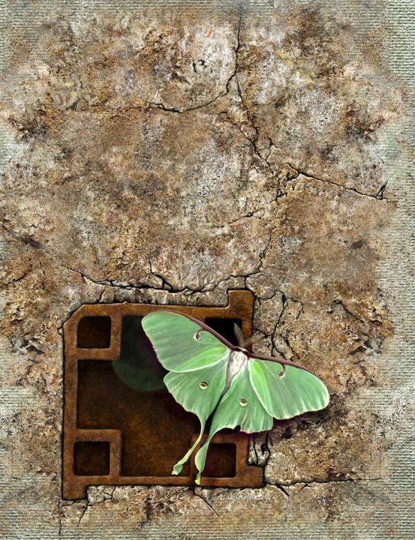 Luna Moth on Mill Stone (Framed original) by Rick  Nass
