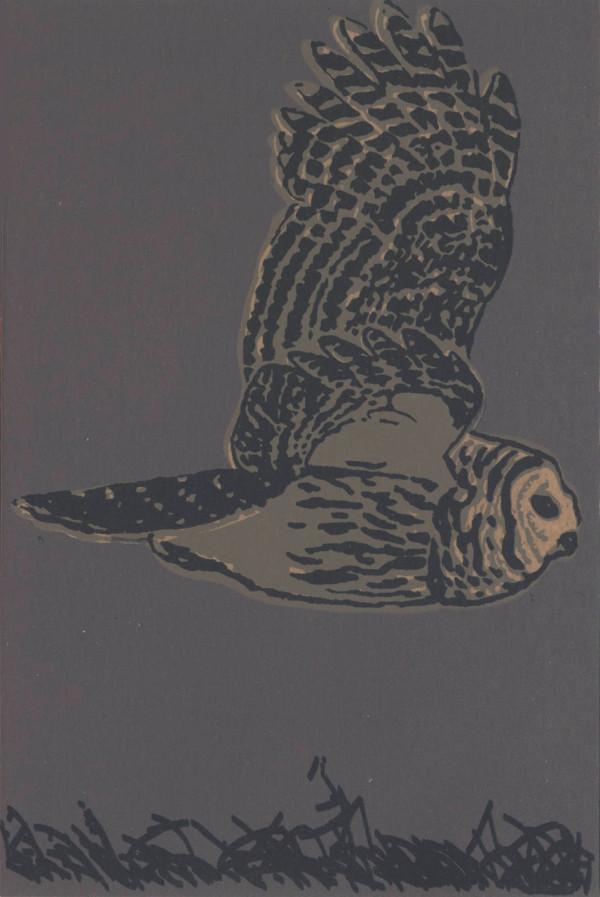 Barred Owl (Framed) by John Miller