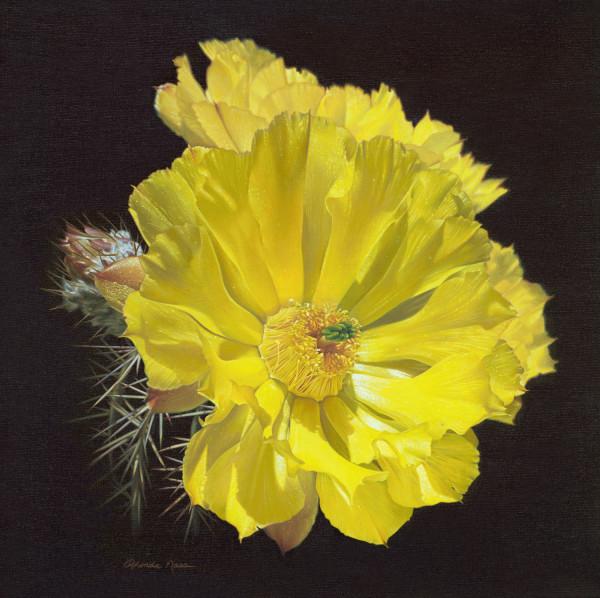 Prickly - Free/ Engelman Prickly Pear Cactus (framed print) by Rhonda Nass