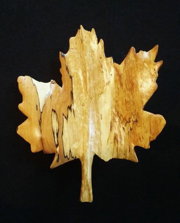Big Leaf Maple (Native to Western North America) by Homer Daehn