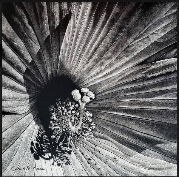 Hibiscus by Rhonda Nass