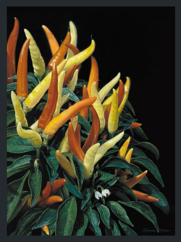 Ornamental Peppers (unframed print) by Rhonda Nass