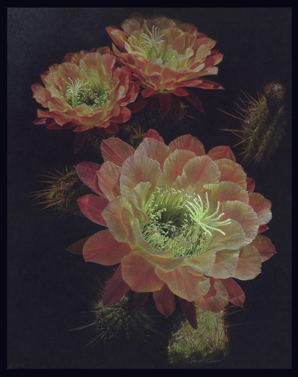 Desert's Rare Apricot Glow (Framed Original) by Rhonda Nass