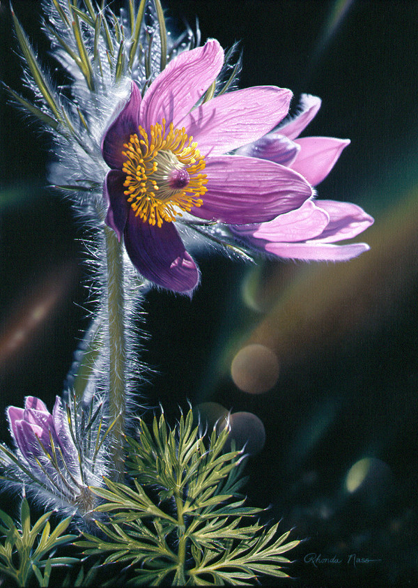 Spring at Last (Umframed print) by Rhonda Nass