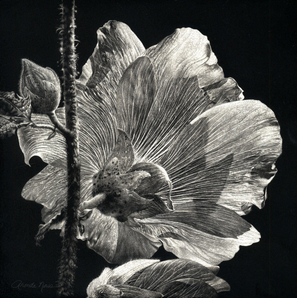 Another Perspective: Hibiscus (Original) by Rhonda Nass
