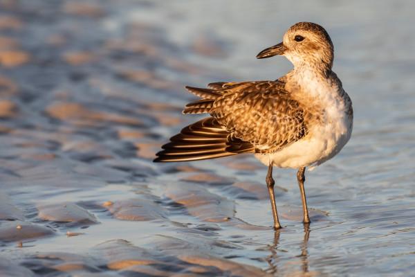 Shorebird (Framed Photo) by Bob Leggett