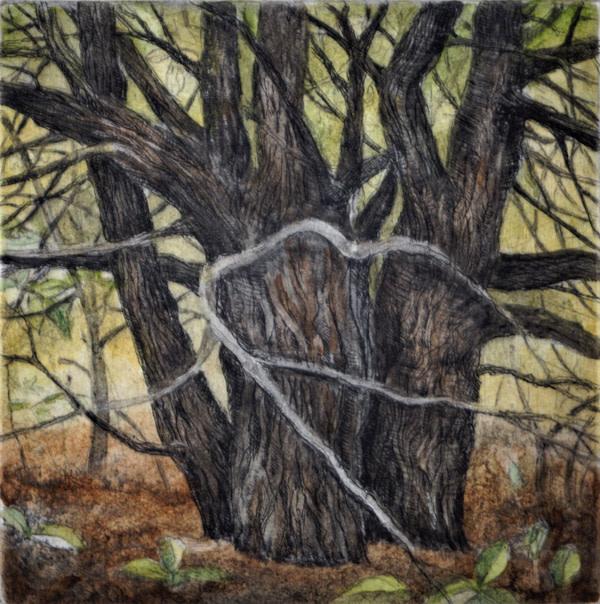 Trail Tree (Framed) by Julie Sutter-Blair