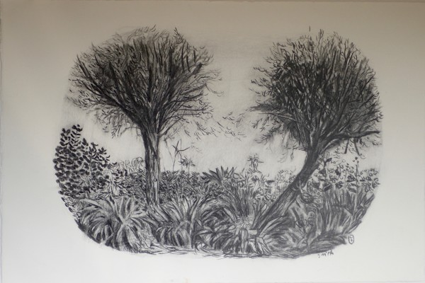 Trees and agapanthus, Lower Leas Coastal Park by CLARE SMITH