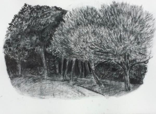 Trees along path, Lower Leas Coastal Park, Folkestone by CLARE SMITH