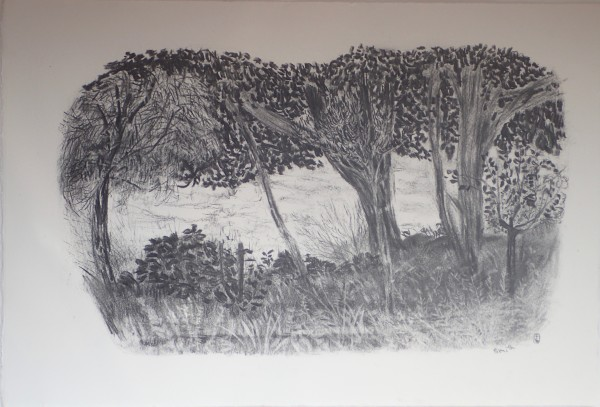 Row of trees, looking out to sea, Lower Leas Coastal Park by CLARE SMITH
