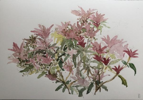 Isolation garden #003, Pieris by CLARE SMITH