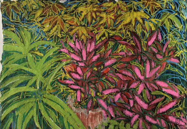Maple and Pieris in the garden by CLARE SMITH