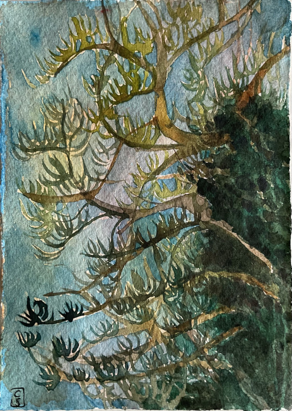 Lone Pine #1, Connaught Park Dover, 2021 by CLARE SMITH