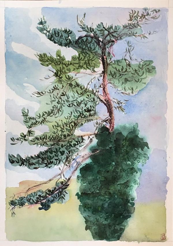 Lone Pine #4, (William Harvey hospital car park) by CLARE SMITH