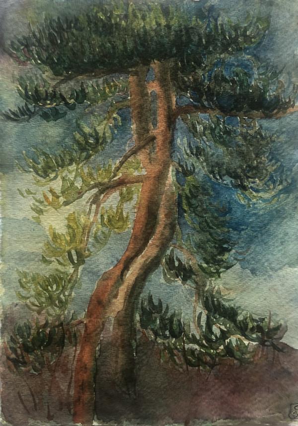 Lome Pine #2, (William Harvey Hospital car park, Ashford), 2021 by CLARE SMITH