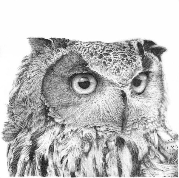 Long Eared Owl - Charlie by Gary Wilcockson