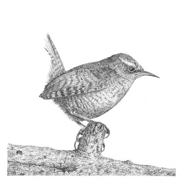 Garden Birds 2 Wren by Gary Wilcockson