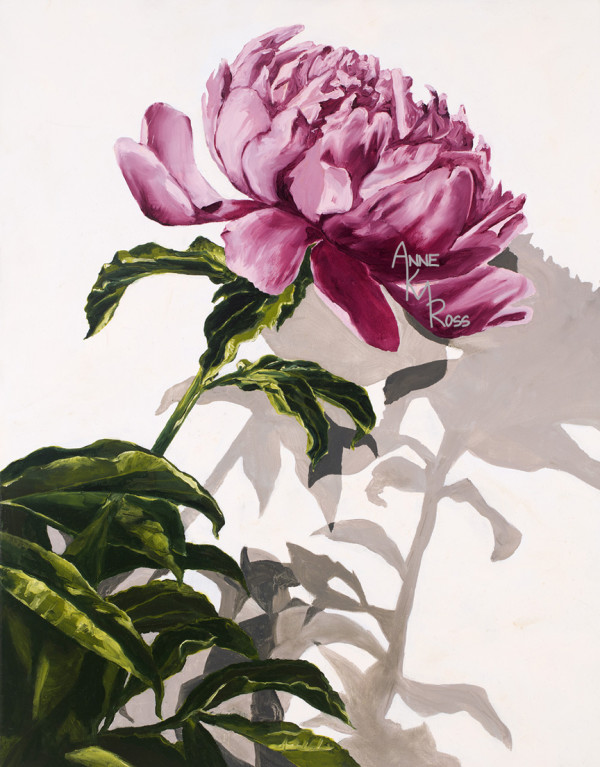 Peony Casting Shadows by Anne KM Ross