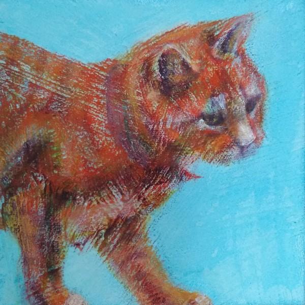 猫在篱芭由丽莎bohnwagner