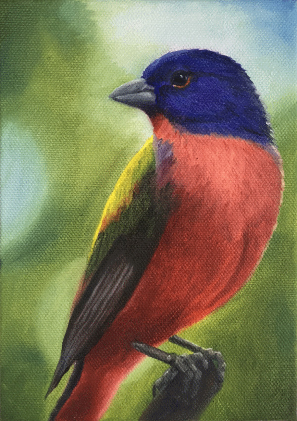 Painted Bunting by Barbara Teusink