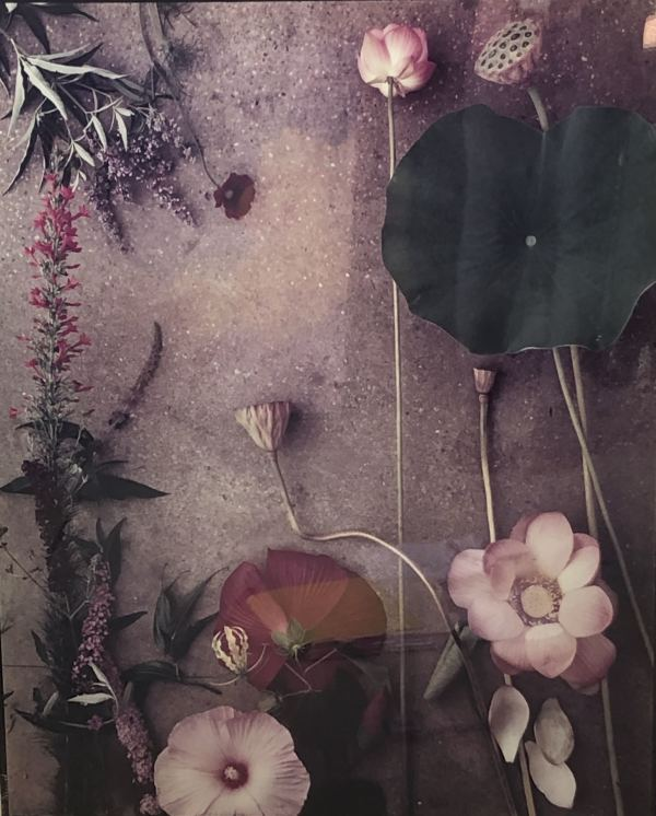 Flower Studies #1007 by Michael Geiger