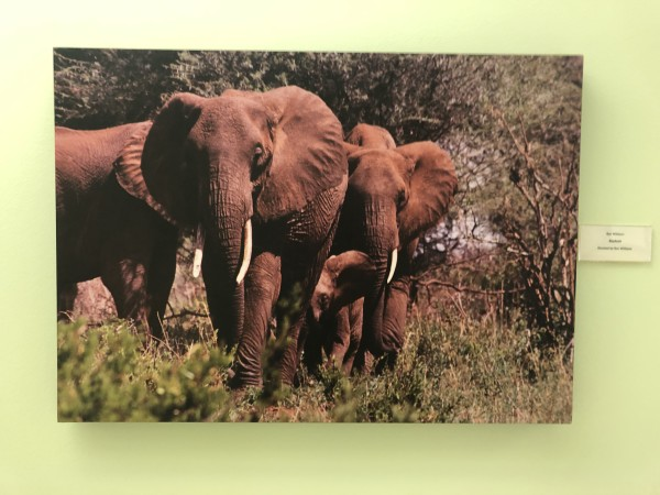 Elephants by Ron Williams