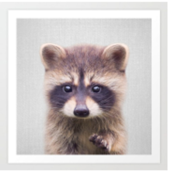 Racoon - Baby Animals by Gal Design