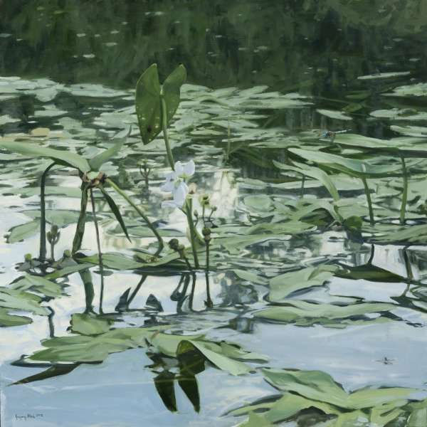 Water Lilies by Gregory Block