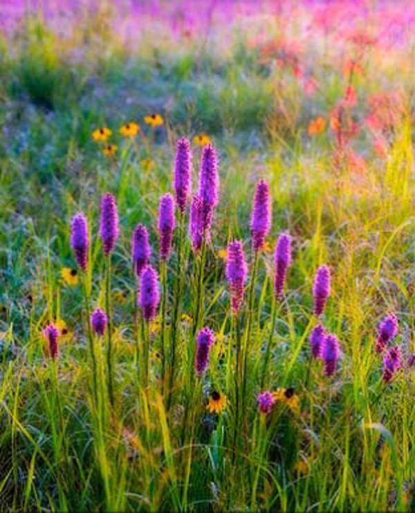 Searles Prairie by William Dark