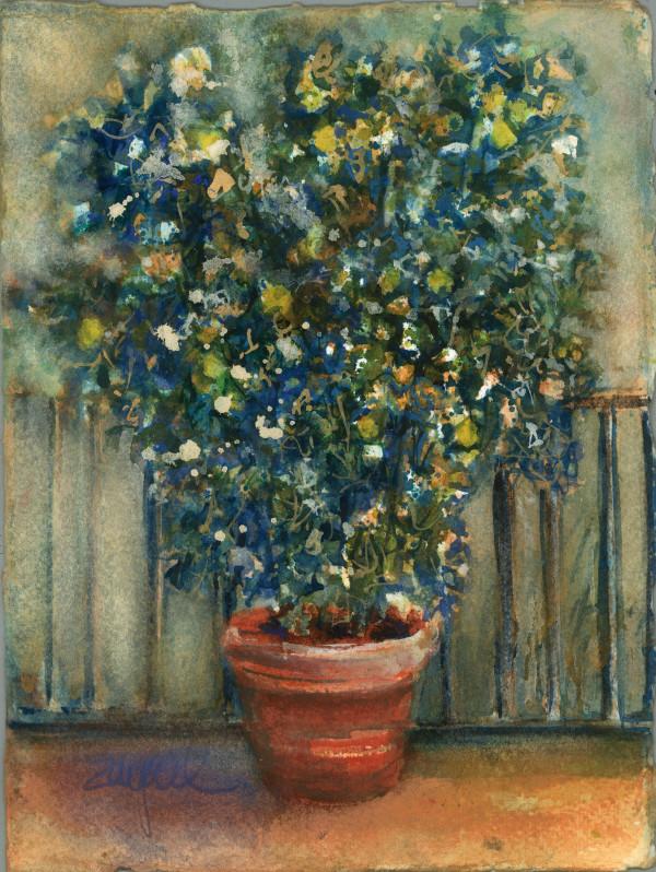 Lemon Tree ~ San Fedele by Rebecca Zdybel