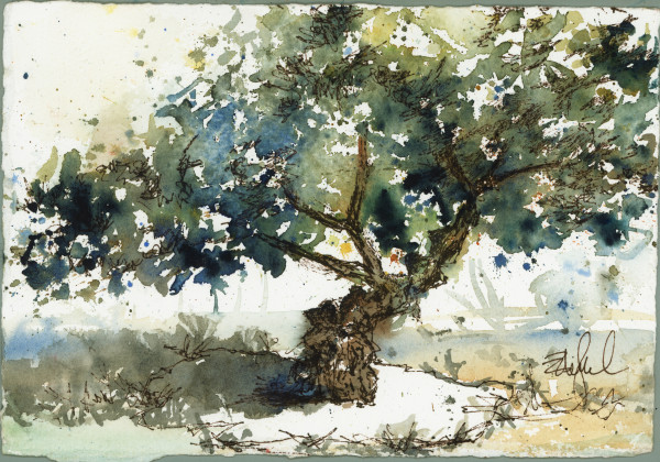 Mastic Tree Study ~ Chios by Rebecca Zdybel