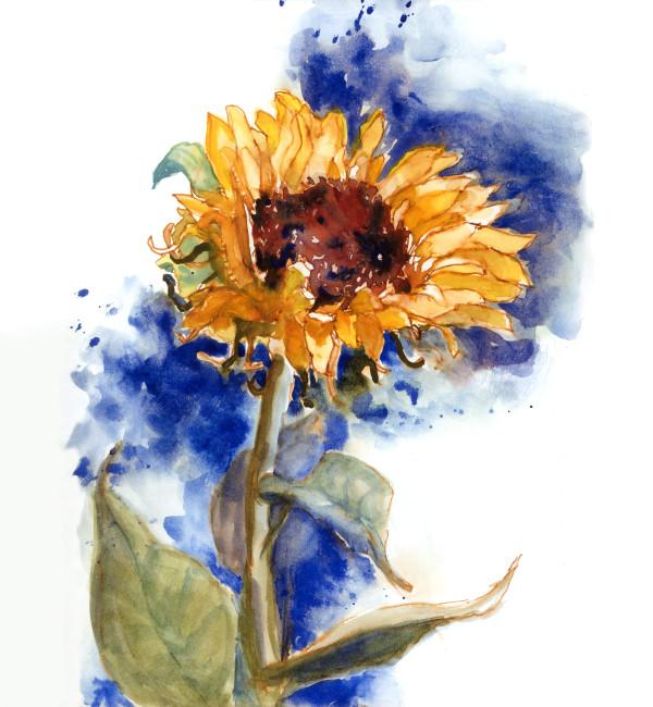 Sun Seeker by Rebecca Zdybel