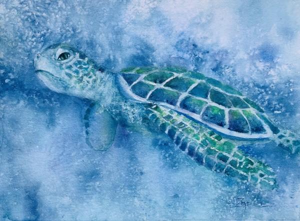 Turtle Daze by Rebecca Zdybel