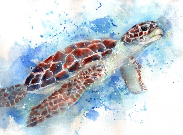 Turtle Two Ways Part Two by Rebecca Zdybel