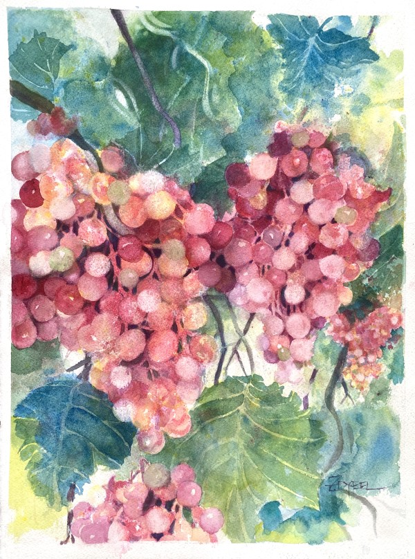 Vineyard Grapes by Rebecca Zdybel