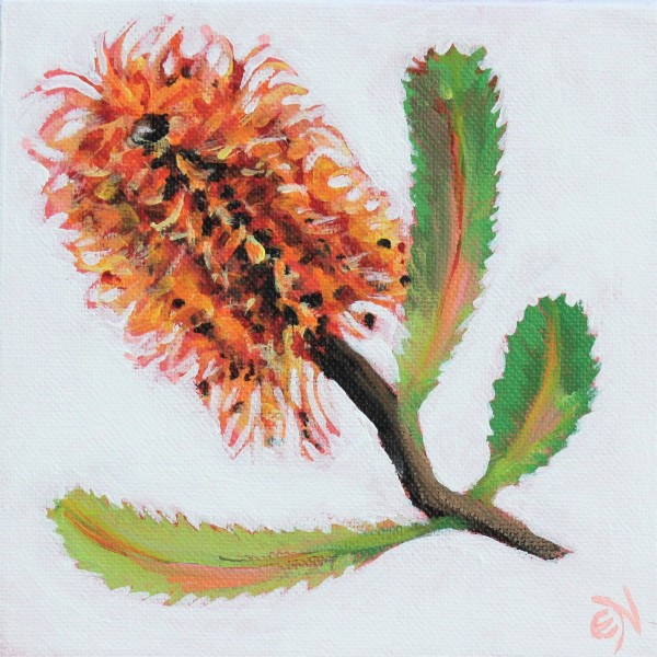 Banksia by Eileen Noyer