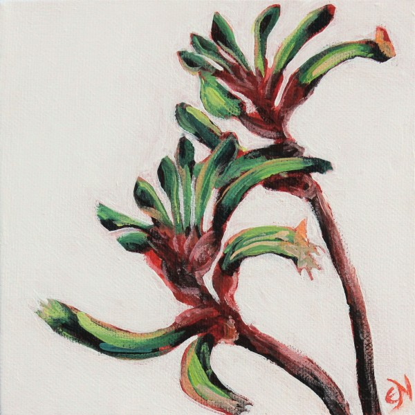 Kangaroo Paw by Eileen Noyer