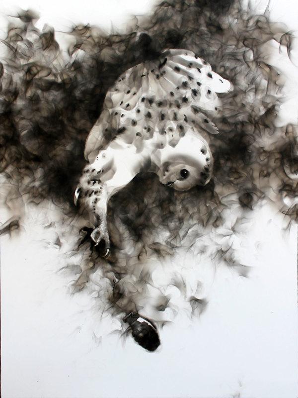 Barn Owl by Steven Spazuk