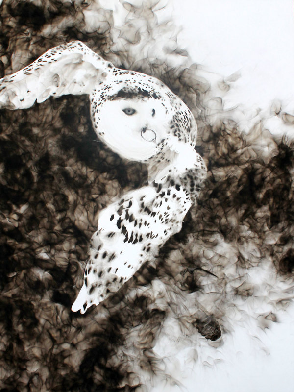 Snowy Owl by Steven Spazuk