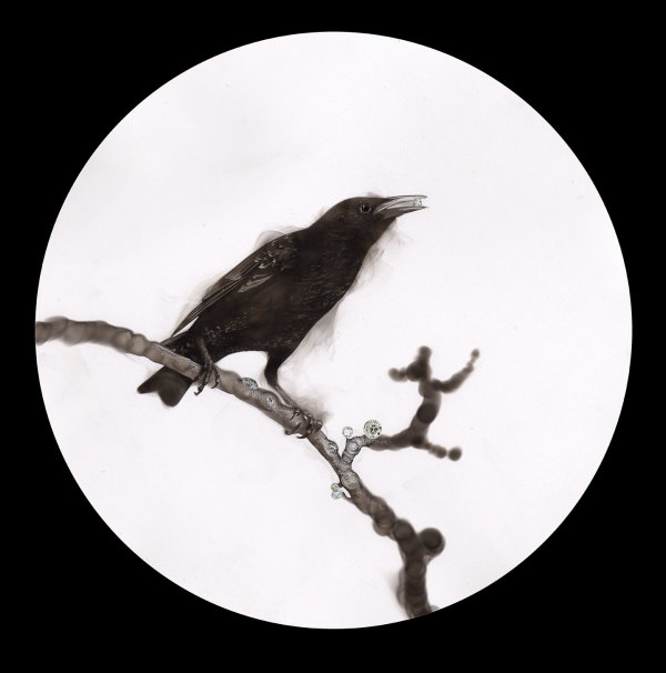 The Starling on the Diamond branch by Steven Spazuk