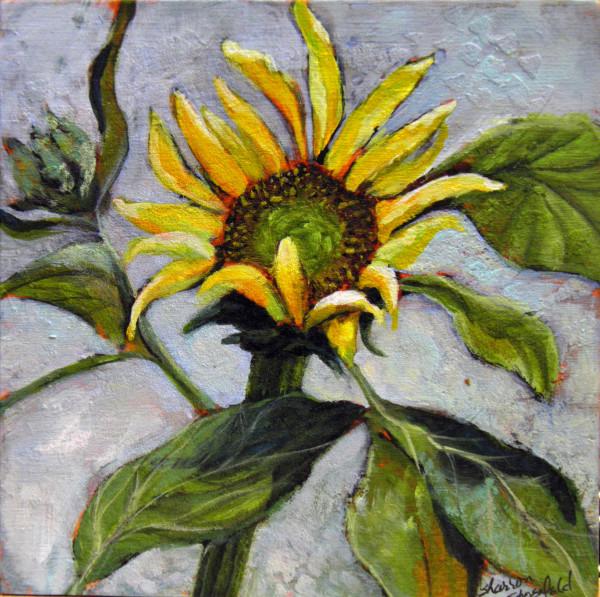 Sunflower at Celeste's by Sharron Schoenfeld