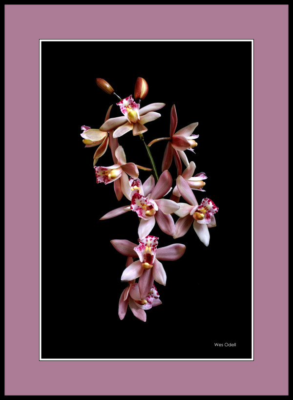 Orchids by Wes Odell
