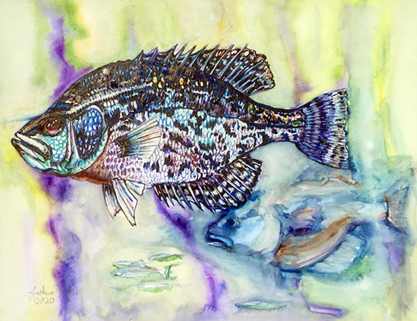 Black Crappie by Joshua Kight