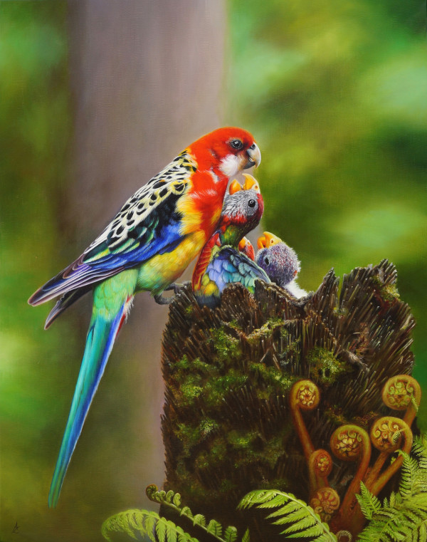 Eastern Rosella commission by Anne-Marie Zanetti