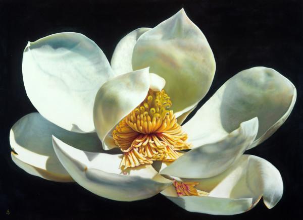 Magnolia Majesty by Anne-Marie Zanetti
