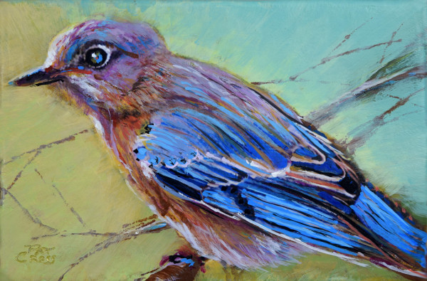 Backyard Bluebird by Pat Cross