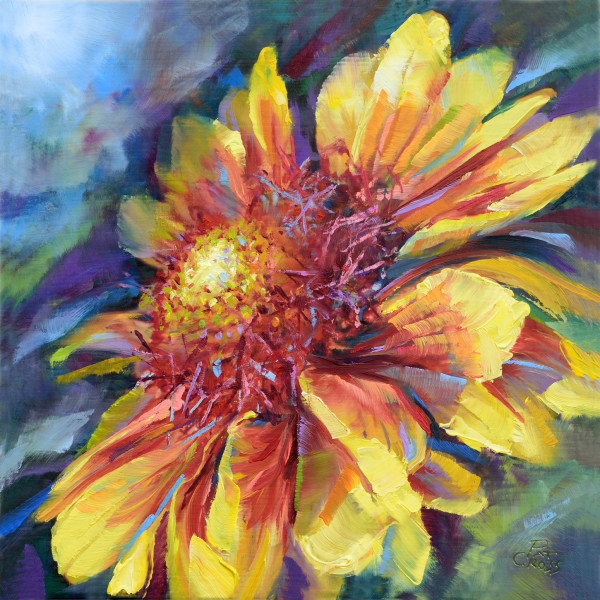 Fiesta Daisy by Pat Cross